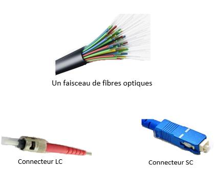 Faisceau et connecteurs de fibre optique